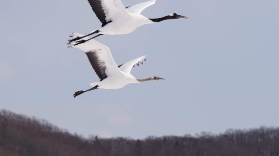 冬の北海道道東の観光地をほぼほぼ楽しむ 女満別から流氷とか知床五湖とかSL冬の湿原号とか阿寒湖でワカサギ釣りとか